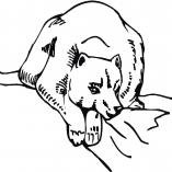 bears2