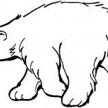 bears6