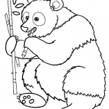 bears9