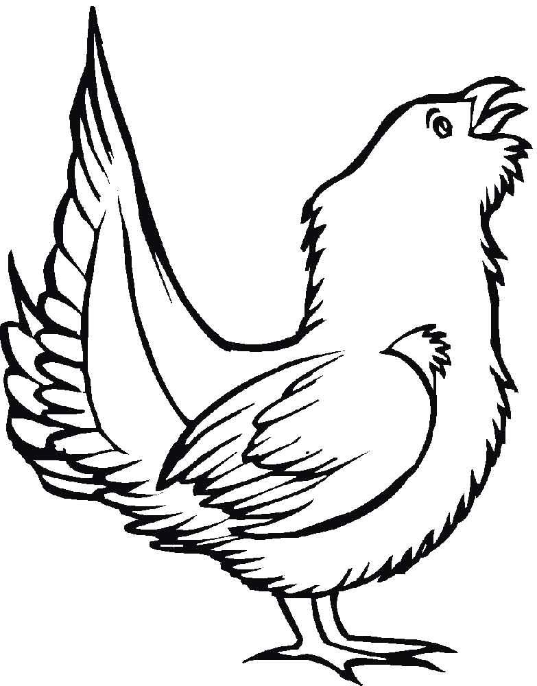 раскраска птицы детские раскраски распечатать скачать