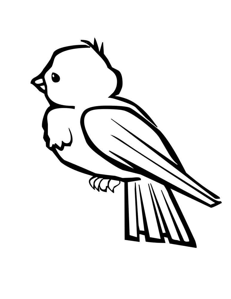 Птичка раскраска малышам