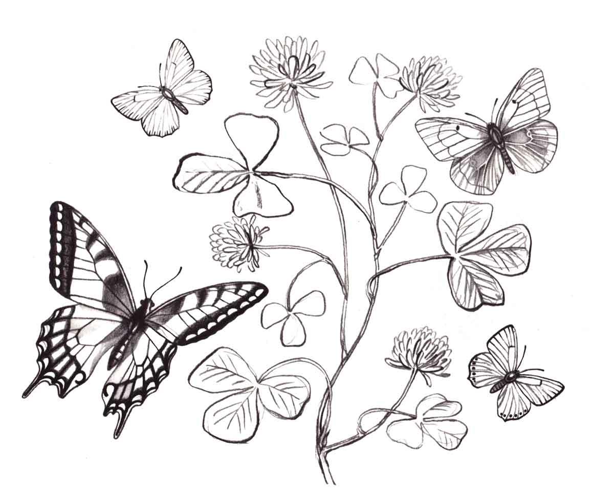 Бабочка раскраска - 8