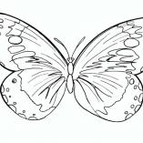 butterflys7
