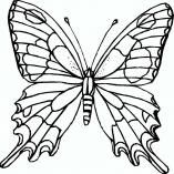 butterflys8