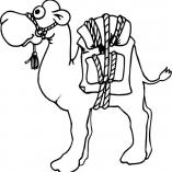 camel12