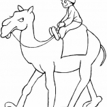 camel7