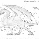 dragonkras8