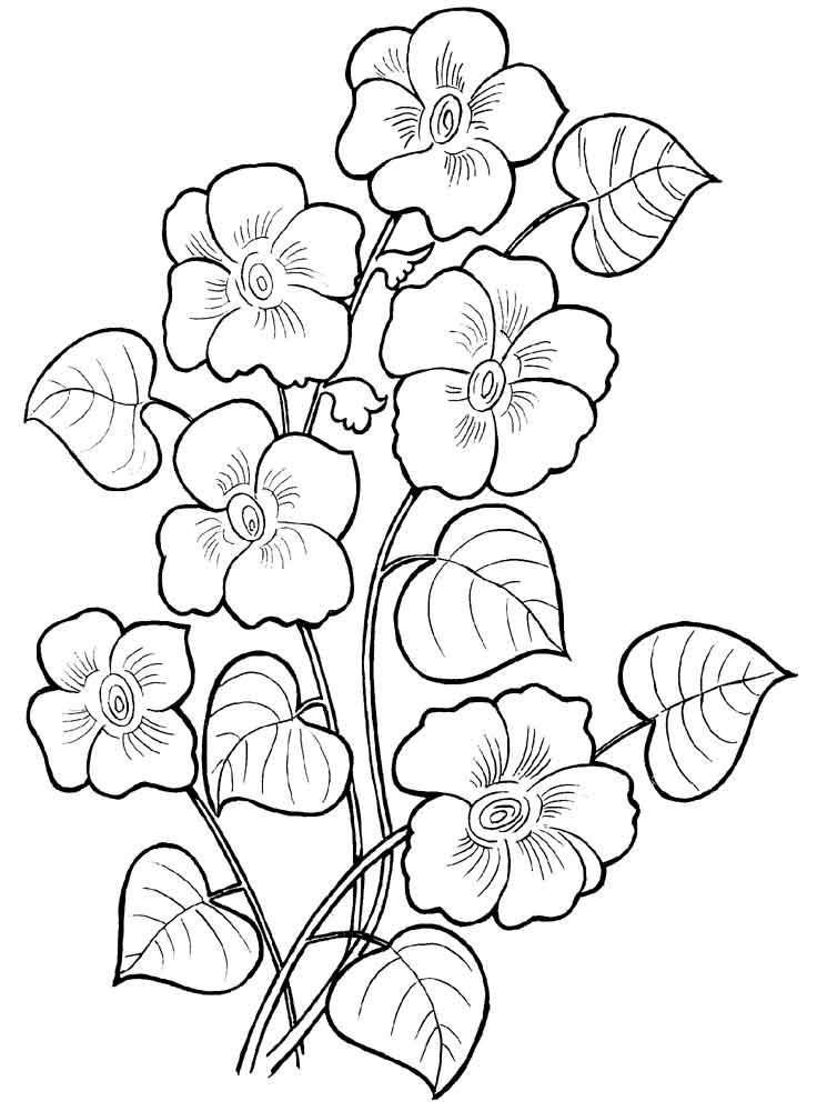 Раскраски цветов мак