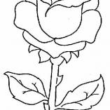 flowers17