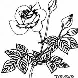 раскраска цветы роза