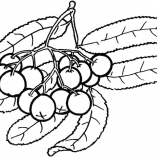 fruits9