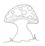 mushrooms8