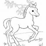 horseprint2
