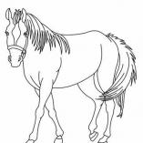 horseprint3