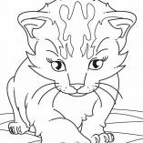 kitten9