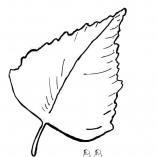 listik8