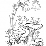 раскраска гриб лисичка