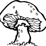 гриб поганка