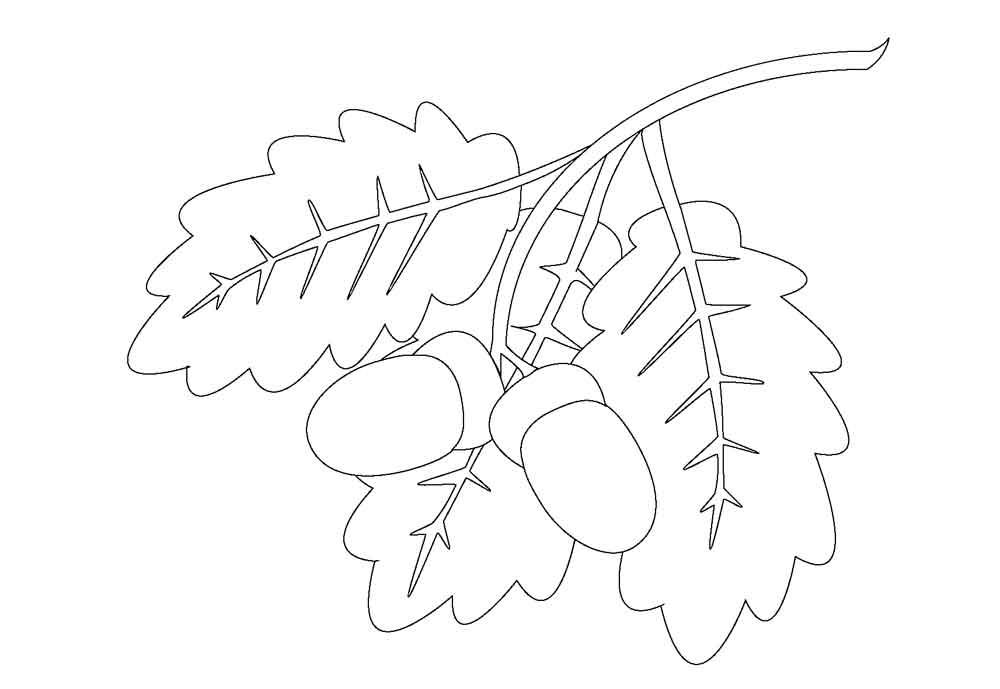 Раскраски лист березы для детей
