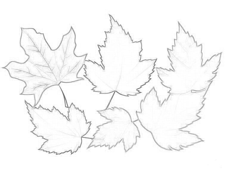 Картинки для раскраски осенние листья