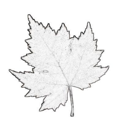 Раскраска осенние листья.Говорят что осень - самое красивое время года. .  С этим трудно не согласиться когда улицы...