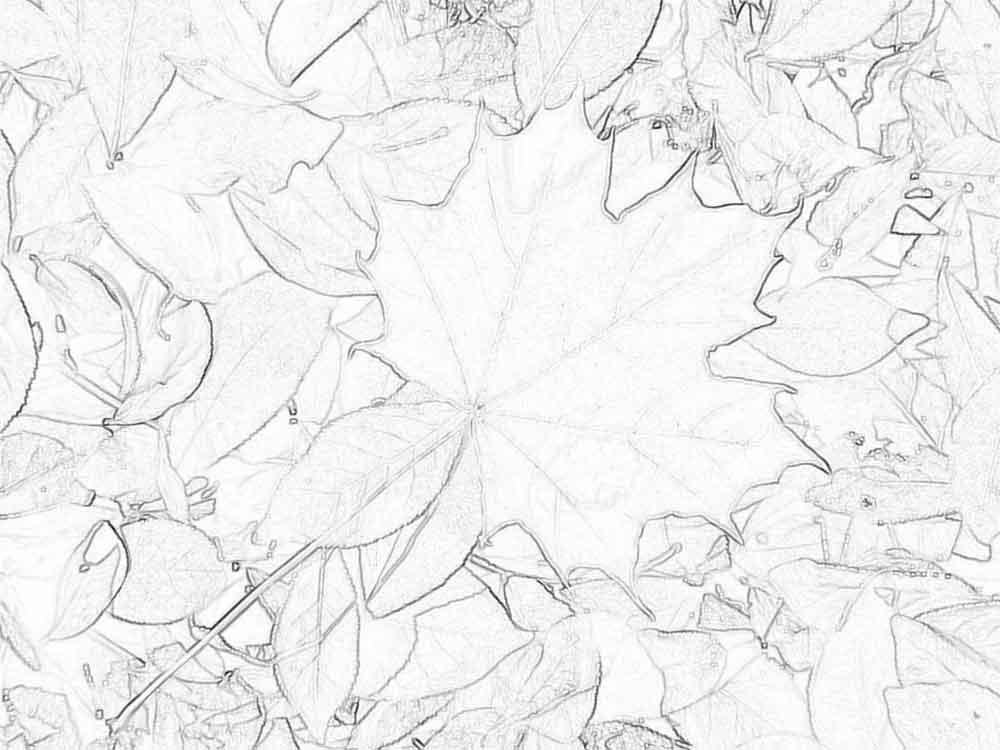 Раскраска осень в лесу детские