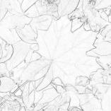 Раскраска осень в лесу | Детские раскраски, распечатать ...