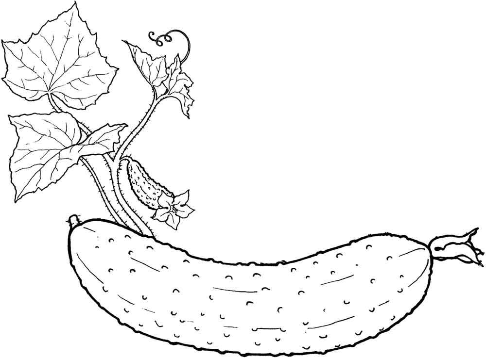 Раскраски Для Детей Картинки Овощи