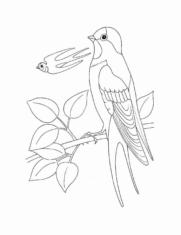 Птицы россии раскраска