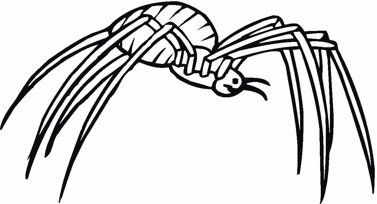 Arañas De Halloween Para Colorear: Детские раскраски, распечатать, скачать