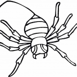 spiders14