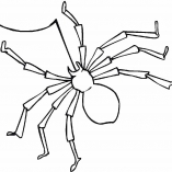 spiders15