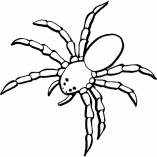 spiders18