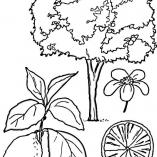 treesdown8