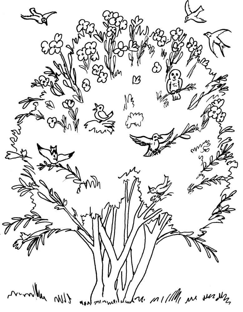 Раскраска дерево   Детские раскраски, распечатать, скачать