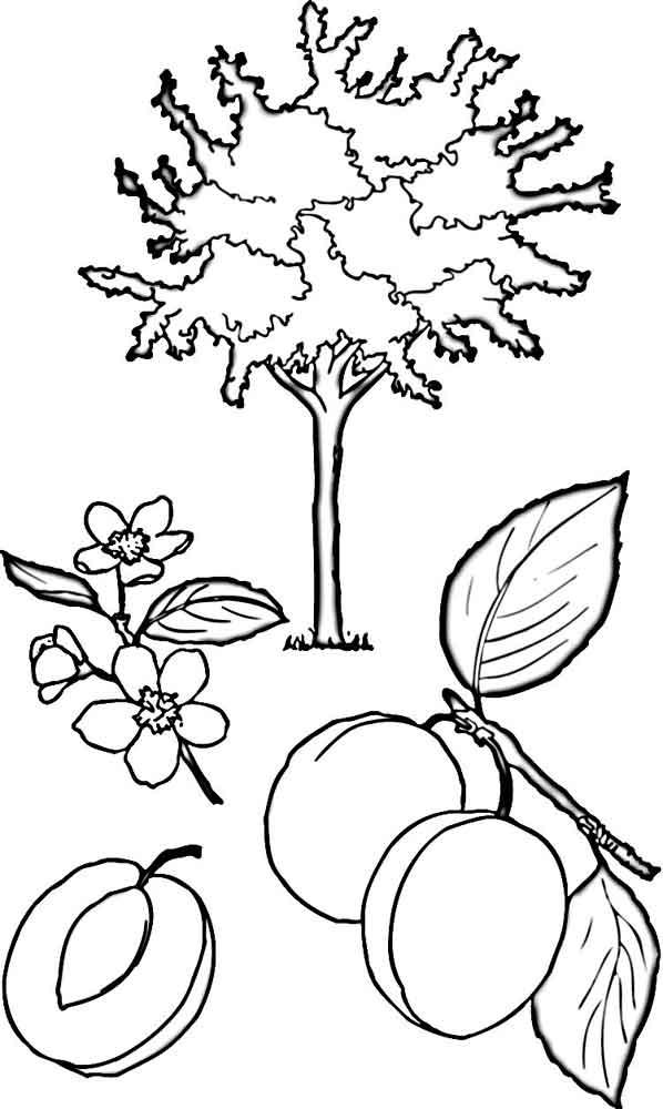 Раскраска дерево  Детские раскраски распечатать скачать