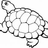 turtles8