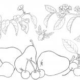 vegandfruit8