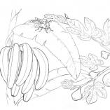 vegandfruit9